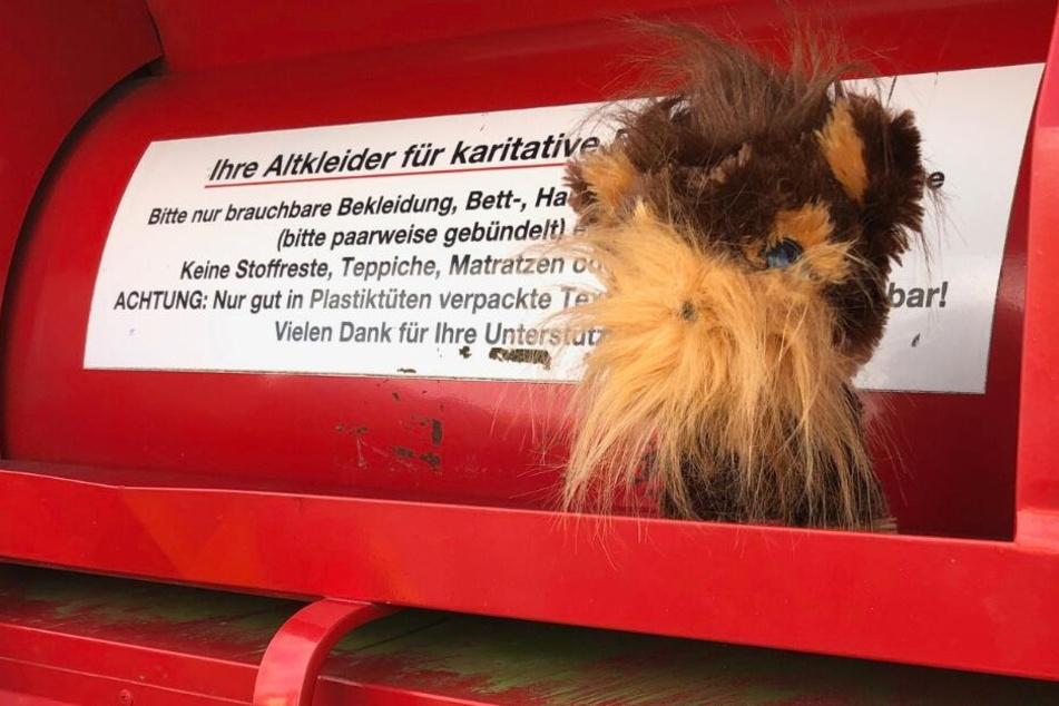 Feuerwehr befreit Hund aus Altkleidercontainer: Dann gibt es eine Überraschung