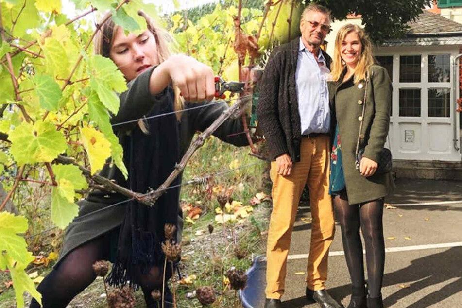 Auf dem Weingut von Günther Klum (74) half die Leipzigerin bei der Trauben-Ernte. (Bildmontage)