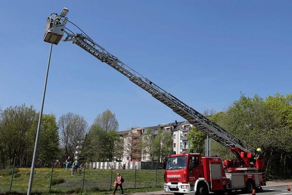 Um den Waschbären von der Straßenlaterne retten zu können, musste die Feuerwehr mit der Drehleiter anrücken.