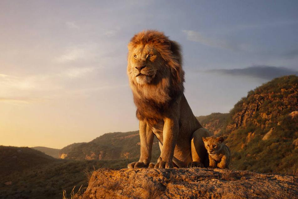 """Die Neuverfilmung von """"Der König der Löwen"""" soll laut vieler Kritiker zwar optisch überragen, inhaltlich aber deutliche Schwächen haben."""