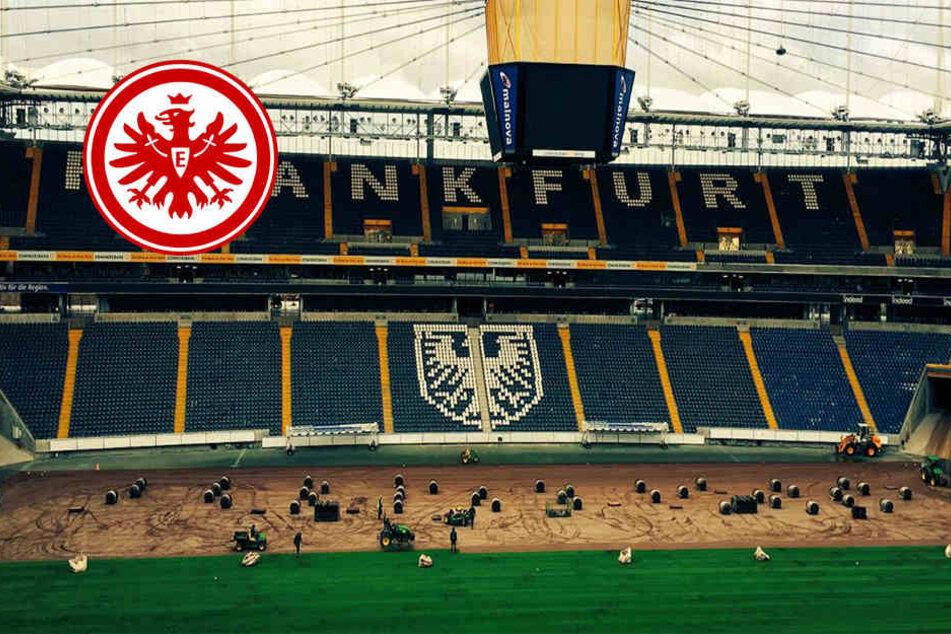 Auch die Eintracht-Fans sprachen sich für ein neues Grün in der Commerzbank Arena aus.