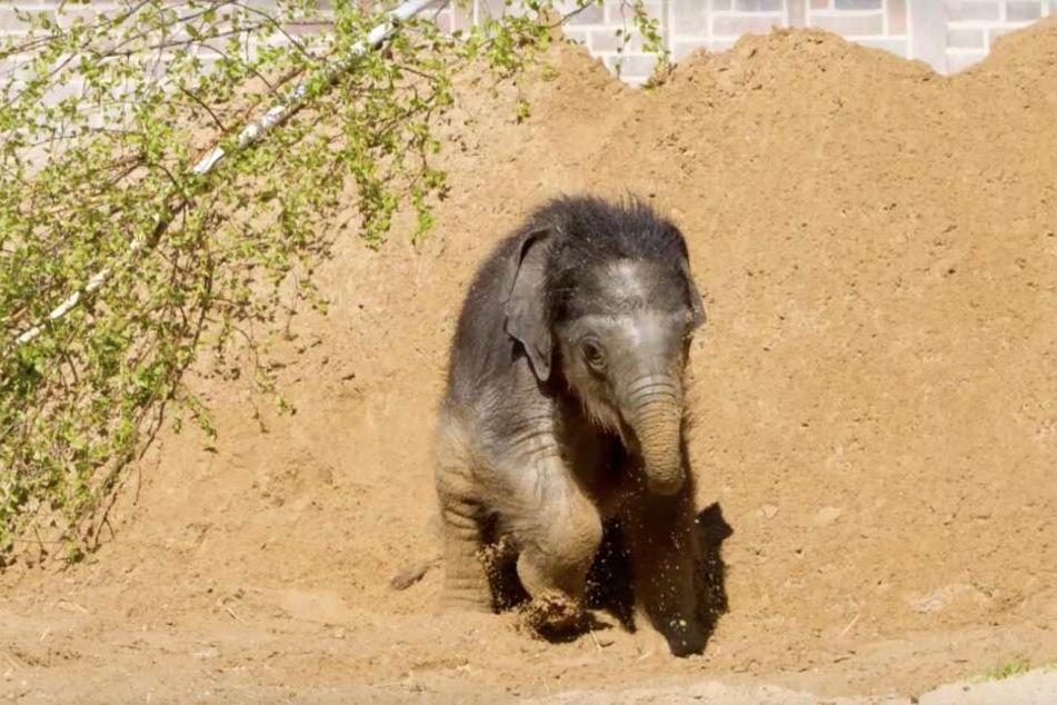 In dieser Woche tollte der namenlose Junge im Sand herum.