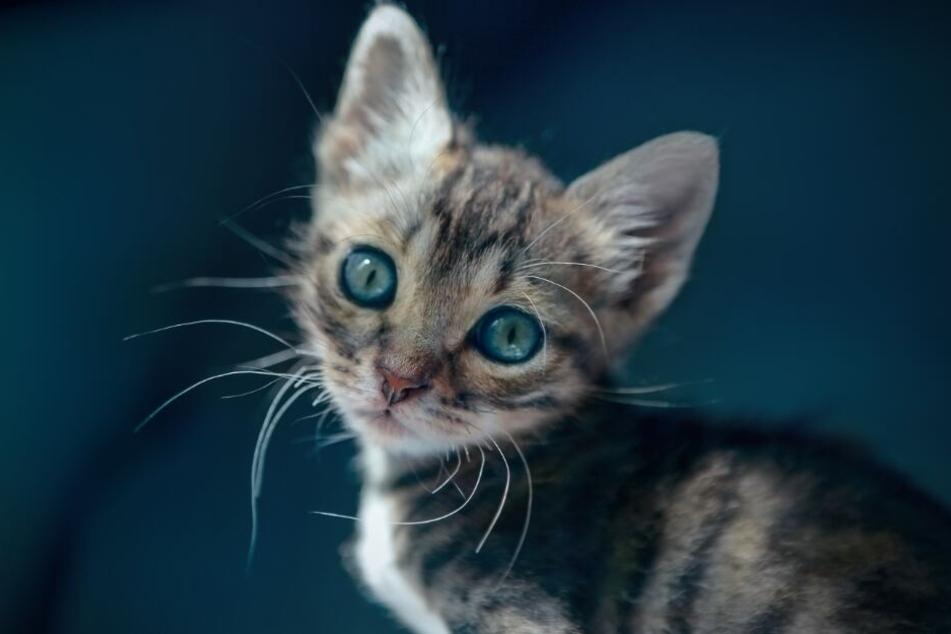 Am Ende konnte die Babykatze unversehrt gerettet werden. (Symbolbild)