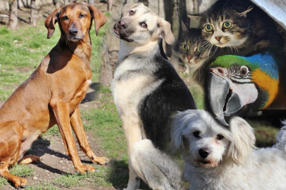 Hund, Katze, Papagei: Diese Tiere suchen ein Zuhause