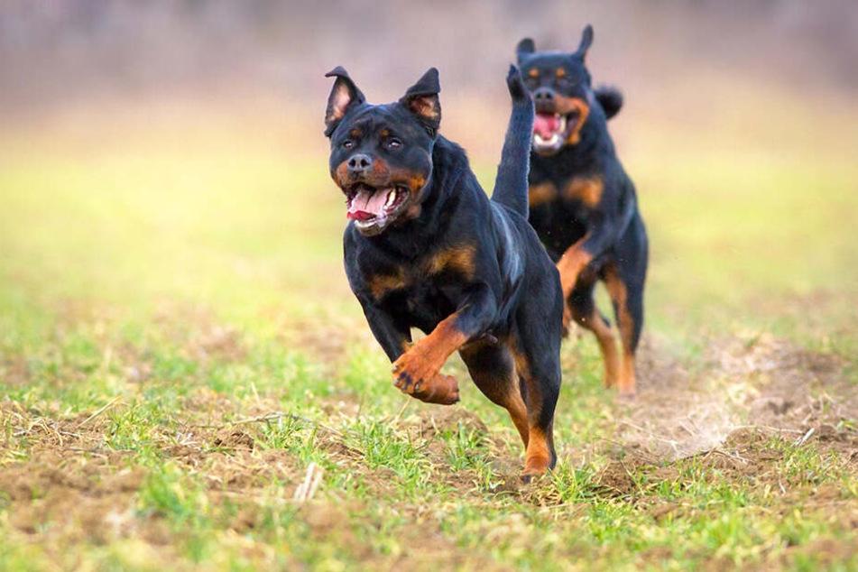 Mehrere Hunde sollen Melvin O. zu Tode gebissen haben (Symbolbild).