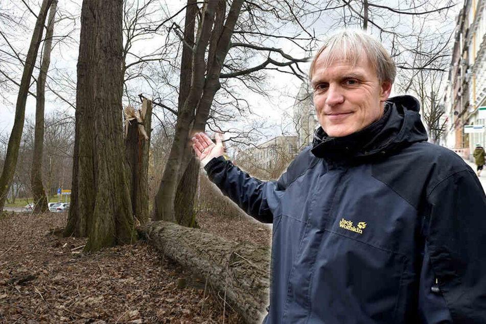 20 Bäume an der Schadestraße kommen weg. Ersatz für die Pappeln ist nicht geplant. Derweil fordert Stadtrat Bernhard Herrmann 875 neue Bäume.