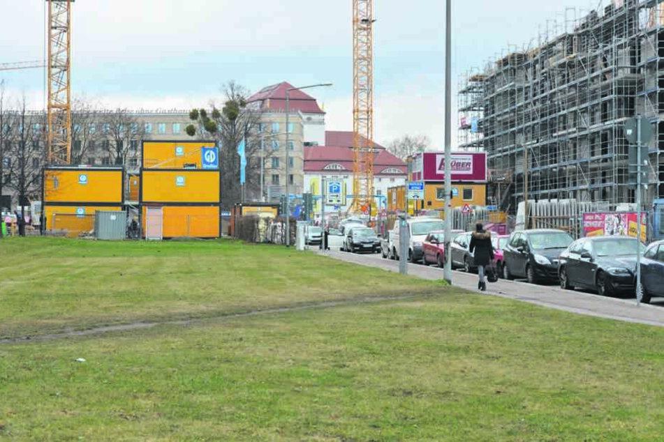 Damit die Linden-Reihen gepflanzt werden können, fällt die Stadt noch die wild gewachsenen Bäume auf der Baustelle der CG-Gruppe (im Bildhintergrund).