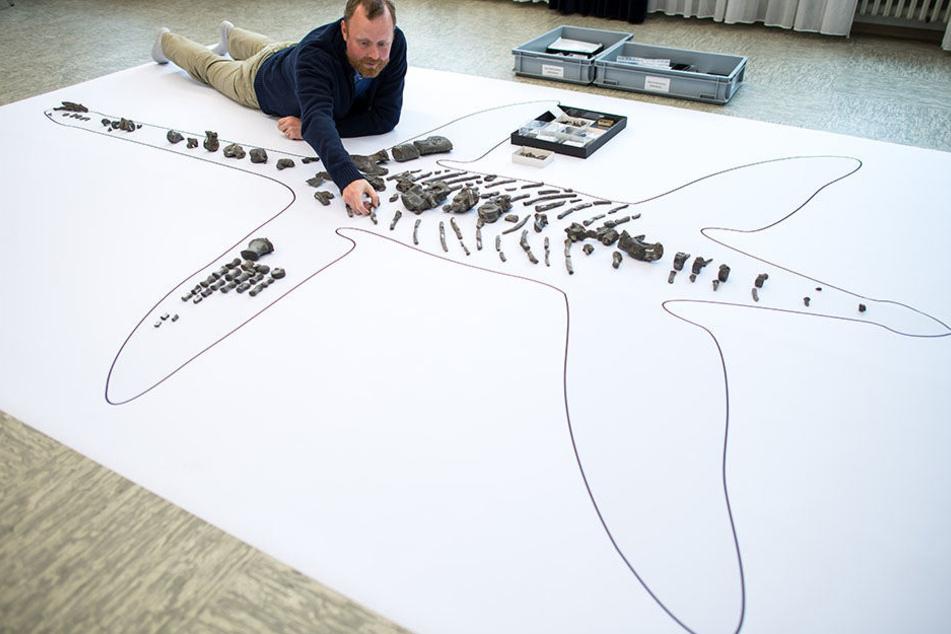 Für Paläontologen Sven Sachs ist das Skelett ein bedeutender Fund.