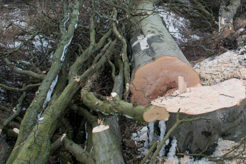 Tödliches Unglück: Ehefrau findet ihren Mann unter einem Baum eingeklemmt