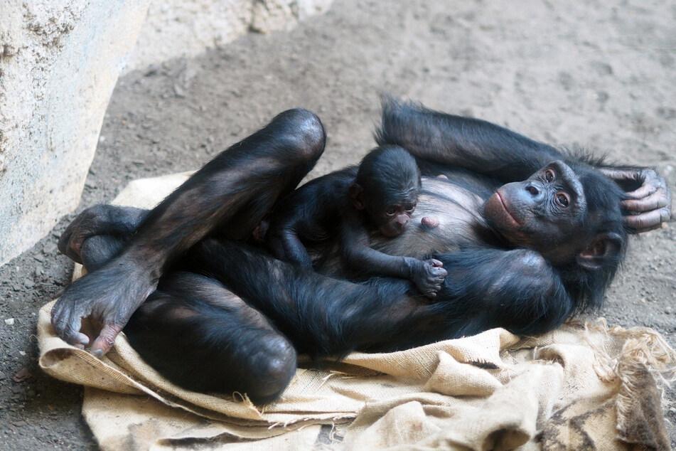 Mama Luiza kümmert sich bisher gut um ihre Tochter.