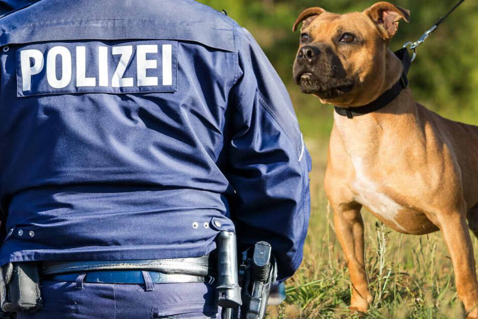 Randalierer lässt Kampfhund auf Polizisten los, dann fallen Schüsse