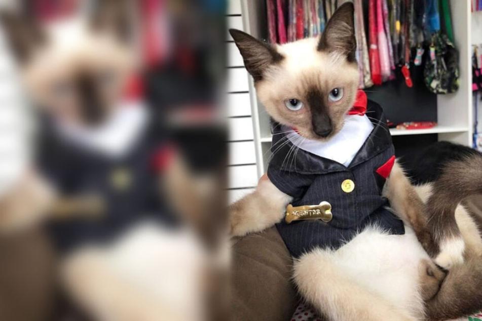 Streunende Katze sorgt erst für Ärger, doch jetzt hat sie einen echten Job