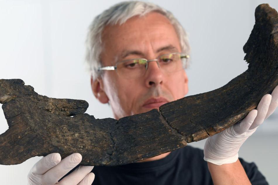 Vor 7000 Jahren haben die ersten Bauern im heutigen Sachsen-Anhalt eine sogenannte Worfschale zum Trennen der Spreu vom Getreide verwendet. Im Bild: Heiko Breuer, Restaurator am Landesmuseum für Archäologie in Halle (Saale).