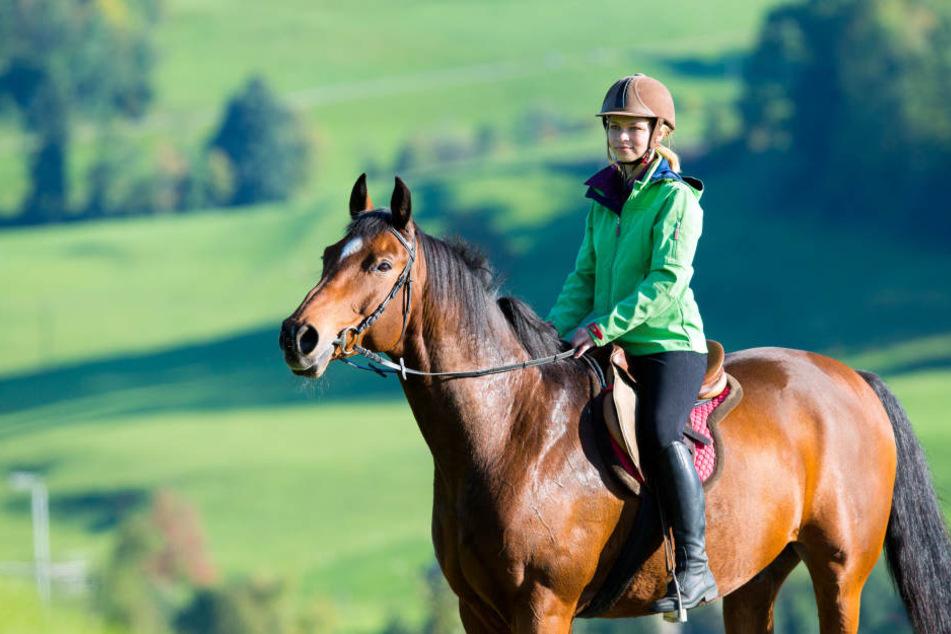 Wer mit seinem Pferd in der Öffentlichkeit unterwegs ist, muss es mit einer Reitplakette kennzeichnen. (Symbolbild)