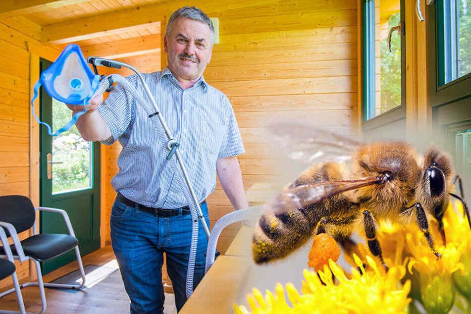 Dieser Imker aus Sachsen will Lungenkranke mit Bienenstock-Luft heilen