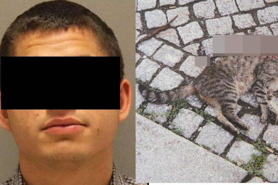 26-Jähriger tötet 21 Miezen und missbraucht Katzenleiche