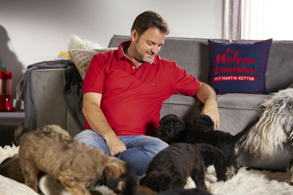 TV-Zuschauern ist Martin Rütter bislang eher als Hundeexperte bekannt.