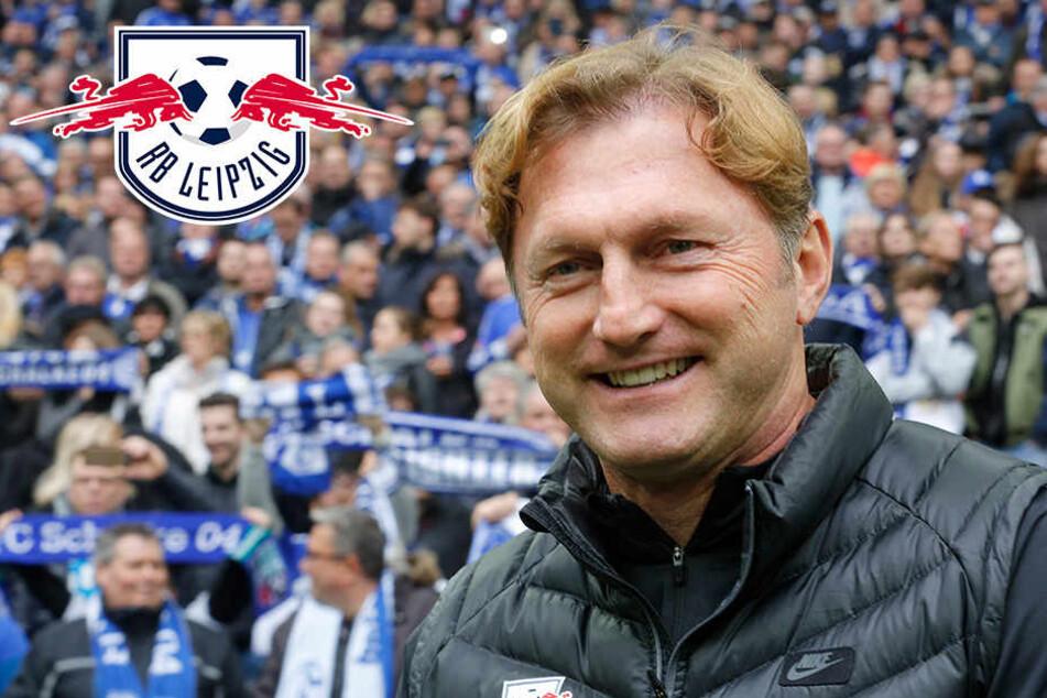 Ralph Hasenhüttl freut sich auf die Champions League.
