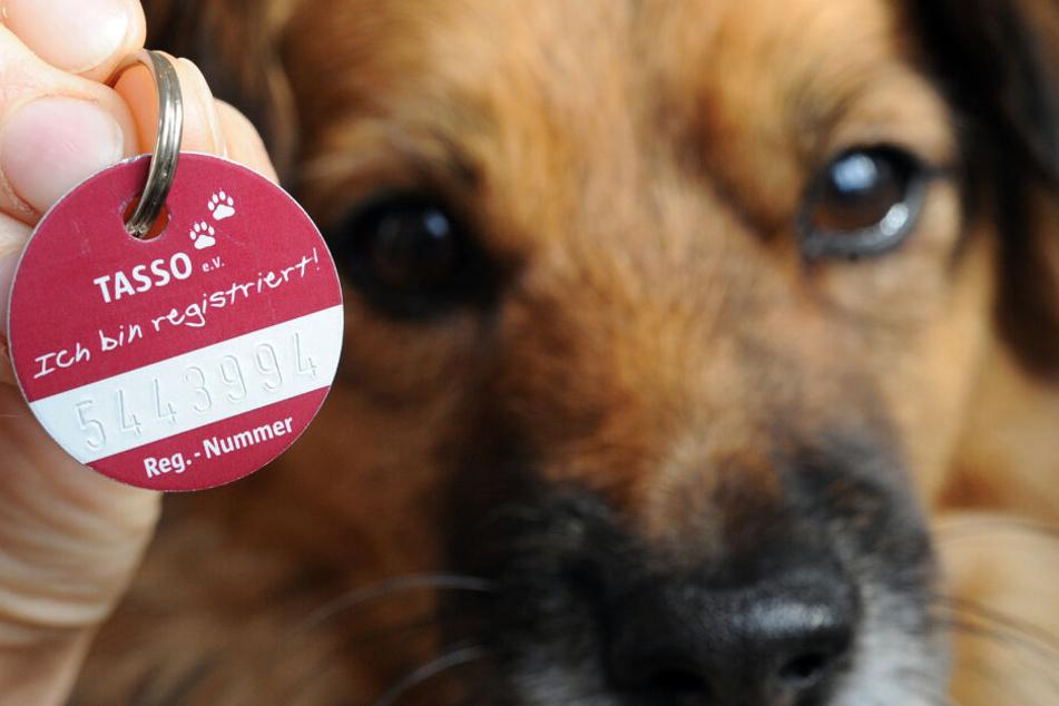 Tierschützer in Hessen fordern die Einführung einer Chippflicht für Hunde und Katzen.