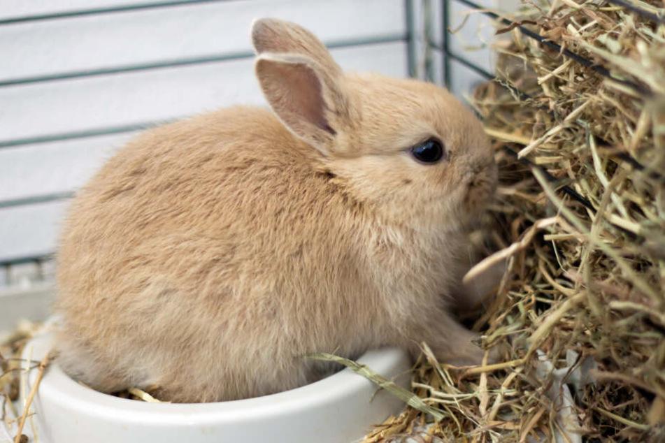 Die Tierheim-Mitarbeiter hoffen nun, dass die Kleinen bald liebevolle Zieheltern finden (Symbolfoto).