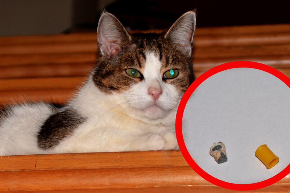 Zwei Diabolo-Projektile im Kopf: Wer schoss auf Kater Max?