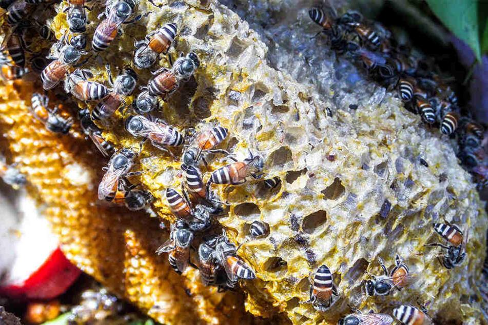 """Die Bienen verteidigten ihr """"Revier"""". (Symbolbild)"""