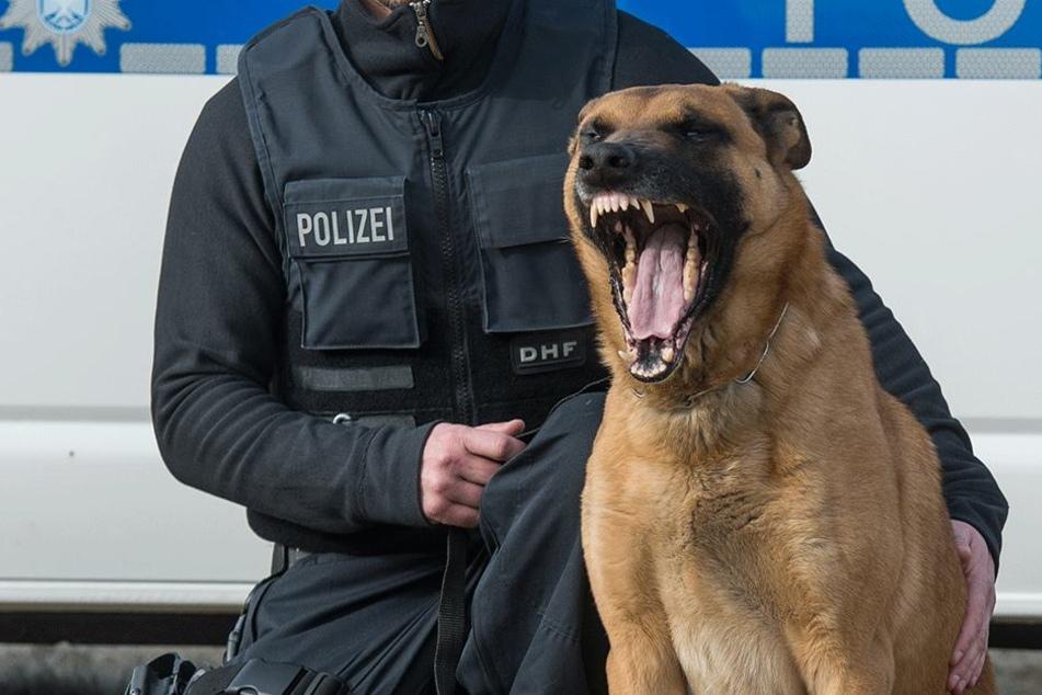 Der Polizeihund biss die Hündin tot (Symbolbild).