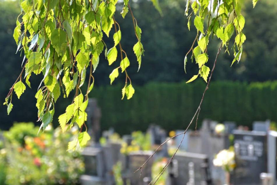 Ein Ast eines Baumes über Gräbern auf einem Friedhof. (Symbolbild)