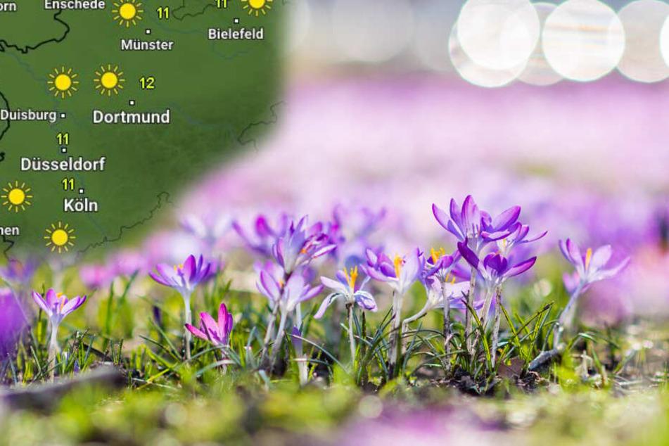 Die Temperaturen in NRW steigen am Sonntag laut Wetter Online auf etwa 12 Grad.