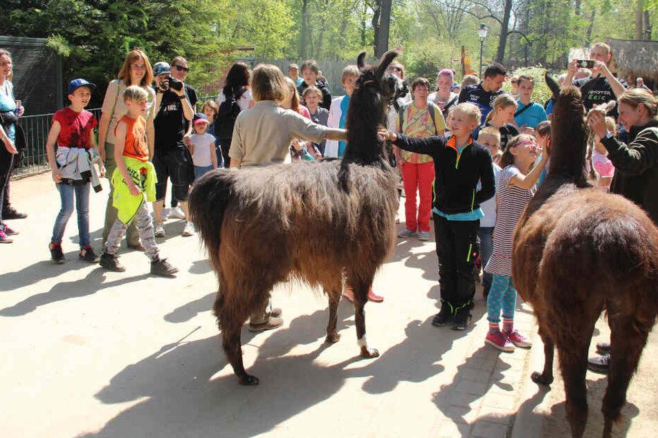 Im Zoo warteten eine Führung und ein buntes Osternest auf die Kinder.