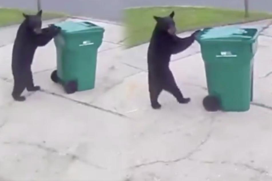 Warn-App schlägt Alarm: Hausbesitzer sieht im Büro, was dieser Bär in seiner Einfahrt treibt!