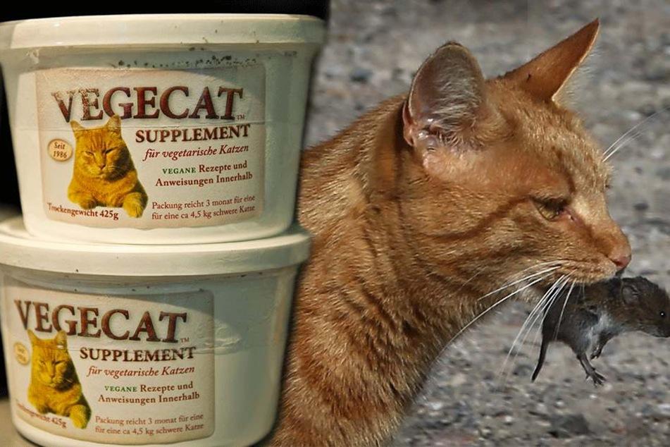 Tierschutz-Organisation will Besitzer, die Katzen vegan ernähren, jetzt bestrafen lassen