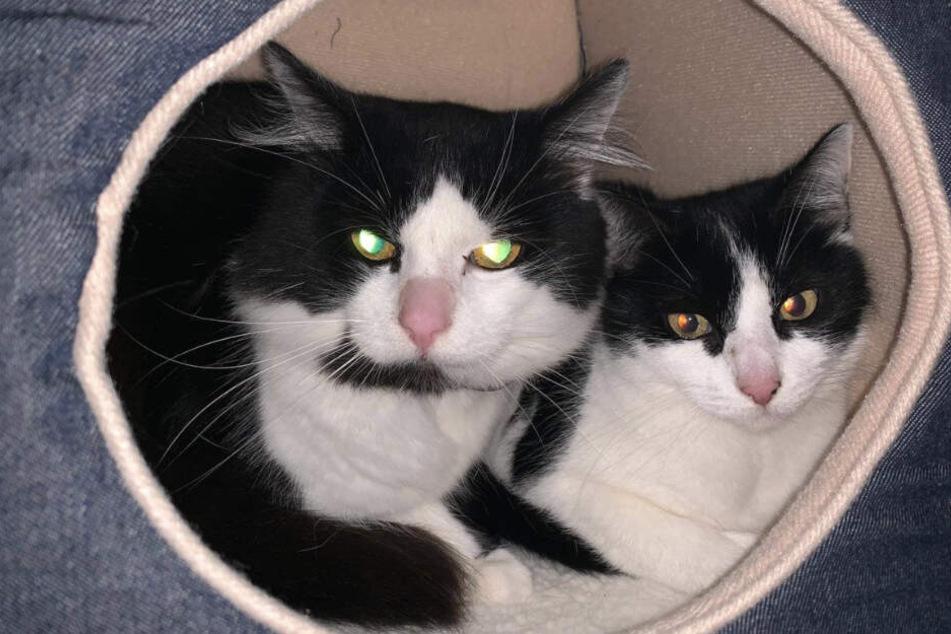 Wie herzlos! Familie zieht um und lässt Katzen in alter Wohnung zurück