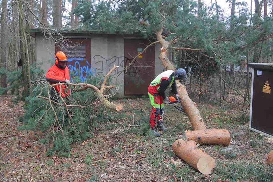 In Grünberg bei Dresden stürzte dieser Baum auf ein Trafohäuschen.