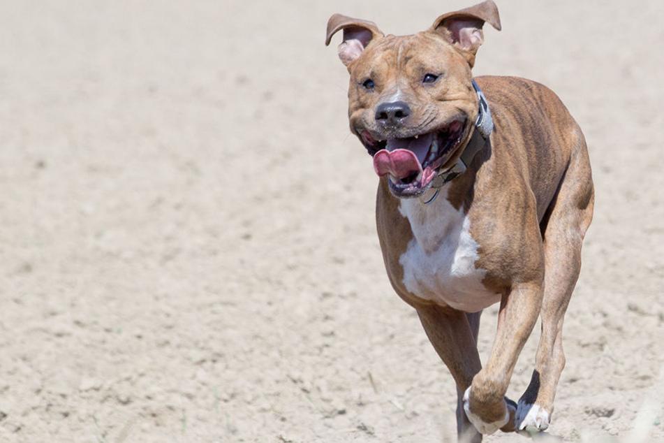In Freiberg ist ein mittelgroßer Hund auf ein zweijähriges Mädchen und einen 23-Jährigen losgegangen. (Symbolbild)