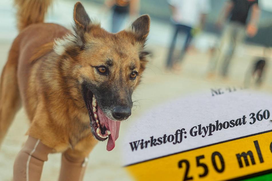 Isopropylaminsalz enthält 360-680 Gramm Glyphosat pro Liter und ist hochgiftig für Tiere!