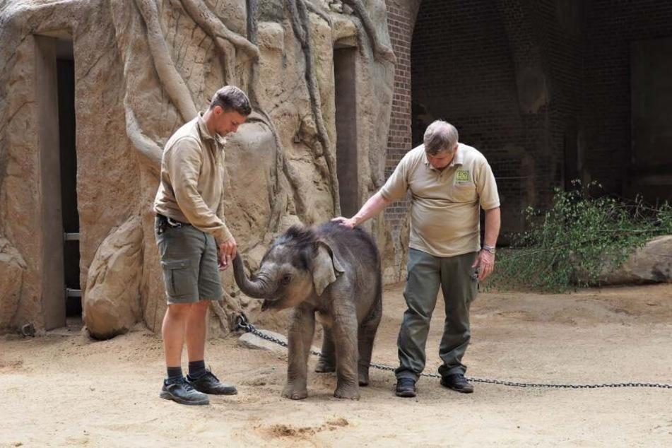 Dem Babyfant geht es gut. Einen Namen hat er trotzdem noch nicht.