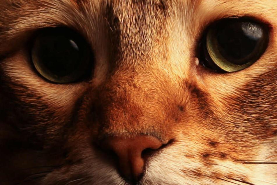 Mit dieser Idee rettet ein Ehepaar alte Katzen vor dem Tod