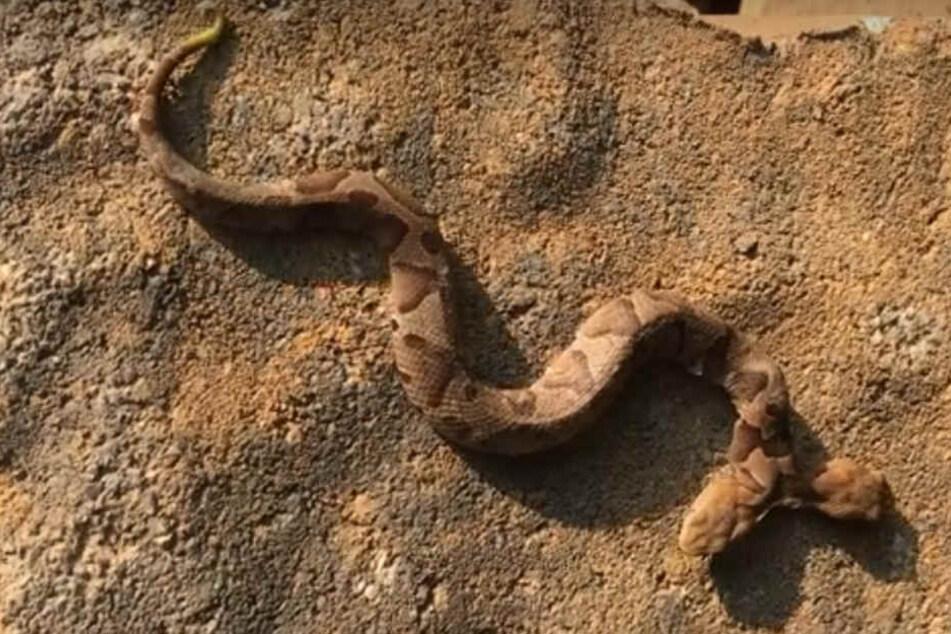 M dchen sex mit schlangen