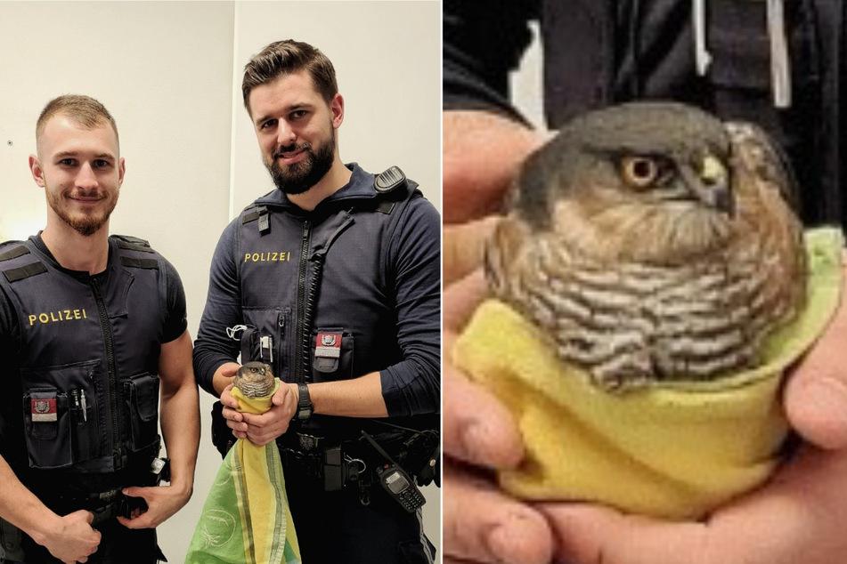 Die beiden Polizeibeamten wurden zu einem tierischen Einsatz in Wien gerufen. (Bildmontage)