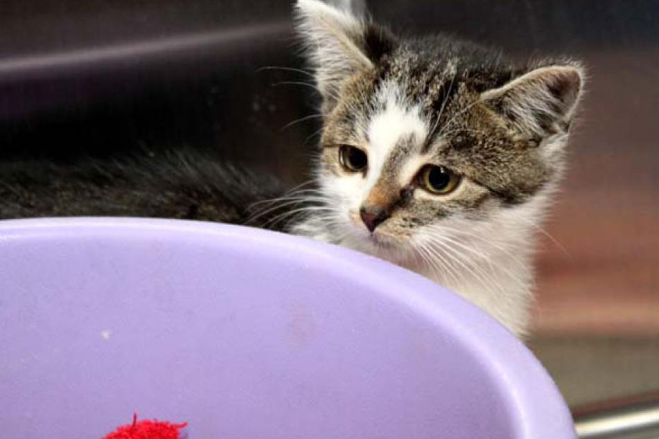 Wer kann helfen? Tierheim ruft den Katzenbaby-Alarm aus!