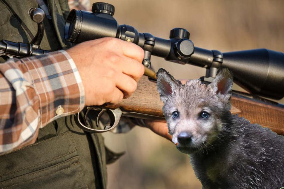 Auch wenn sich das Ministerium dafür ausspricht: Gerettet sind die Wolfmischlinge von Ohrdruf damit noch nicht (Symbolbild).