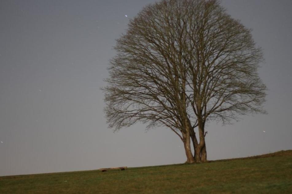Das Opfer schleppte sich über eine Wiese, lag dann bei Kälte zehn Stunden lang unter freiem Himmel (Symbolbild).