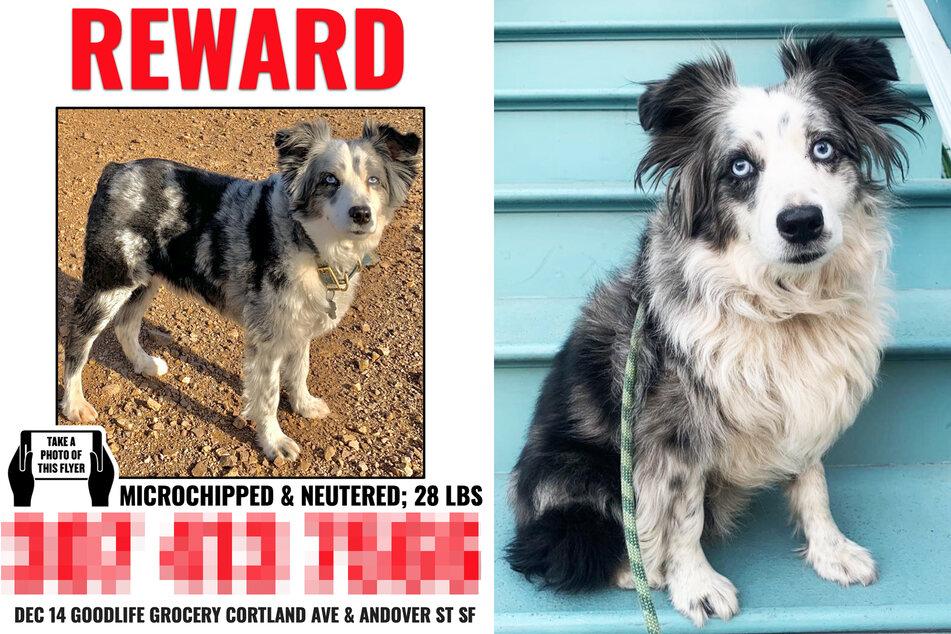 Mit diesem Flyer suchte Emilie Talermo in San Francisco nach Hund Jackson.