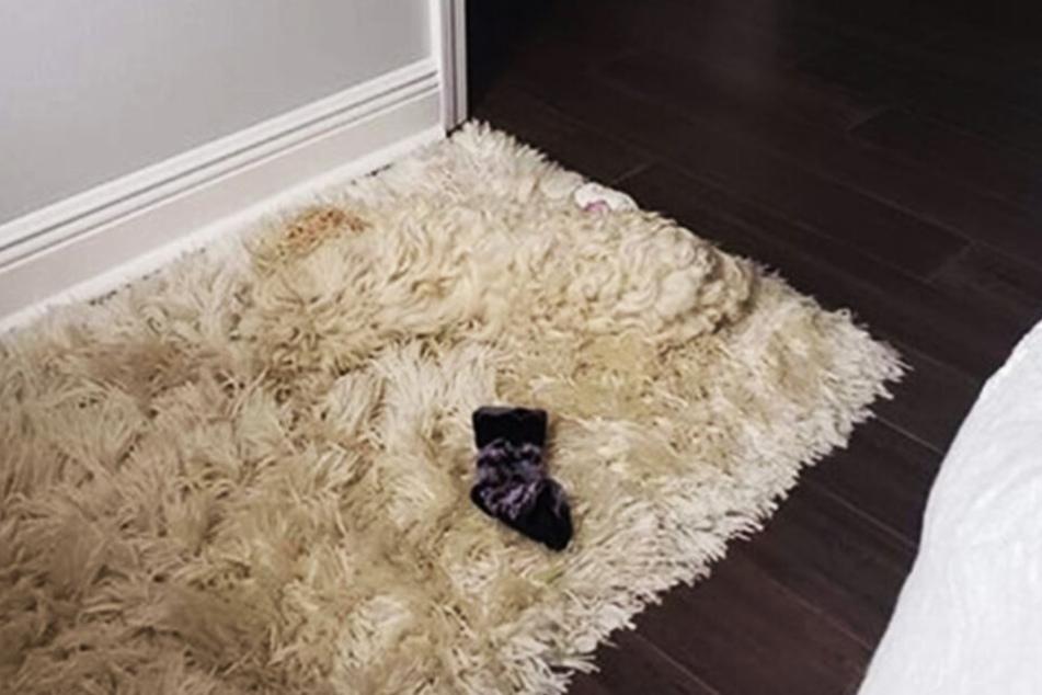 Normalerweise schläft der Hund auf dieser Decke.