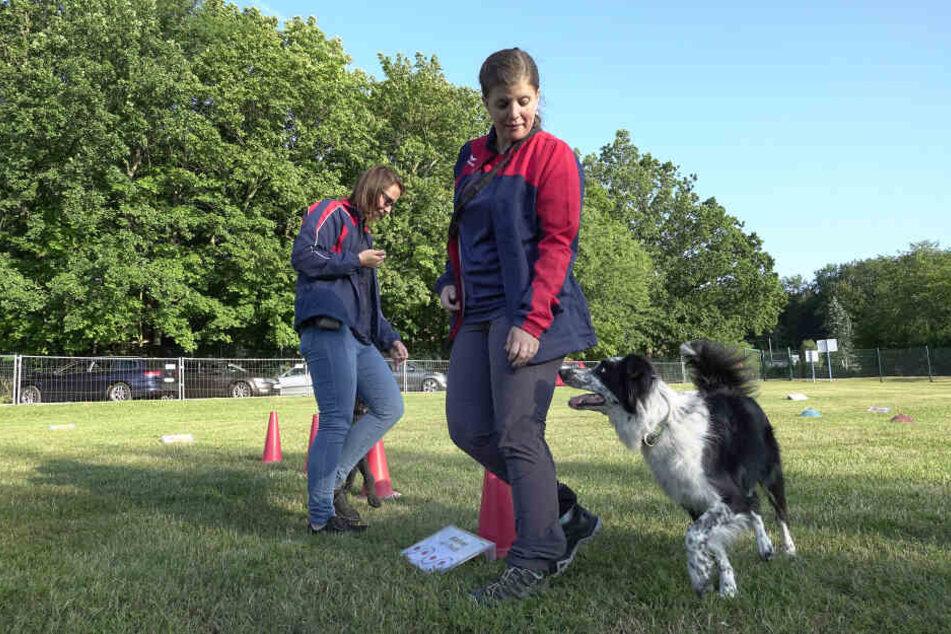Annika Hartwig (28) durfte den Parcours zusammen mit Border-Colly Cody (5) vorab testen.