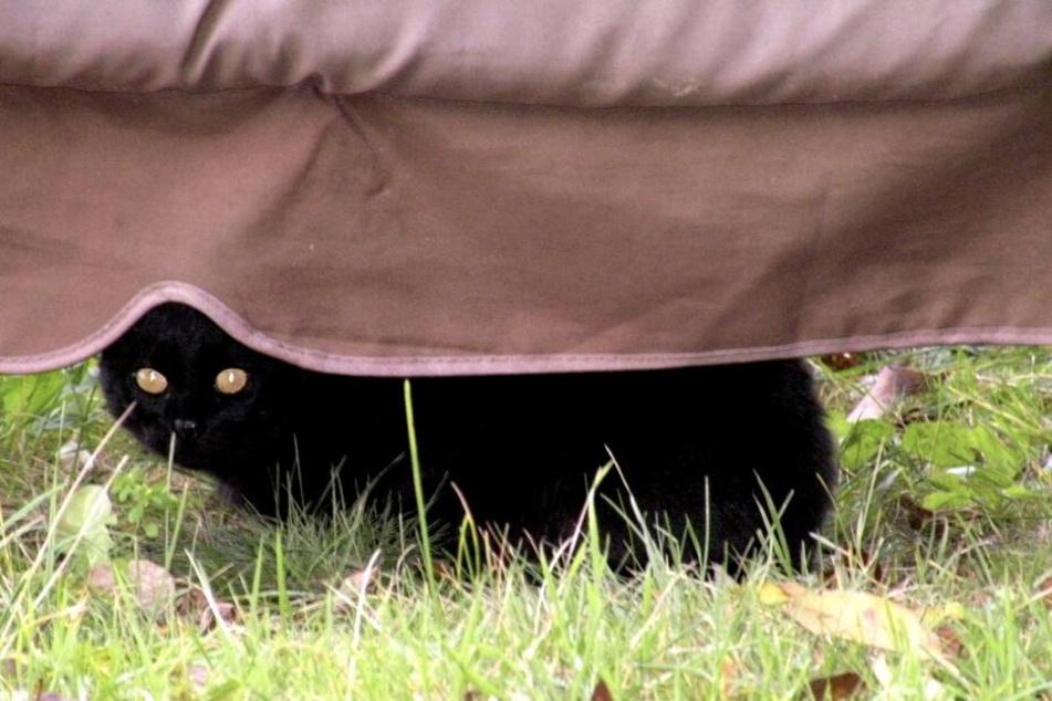 Bei schwarzen Katzen kann man als Schornsteinfeger schon mal abergläubisch werden.
