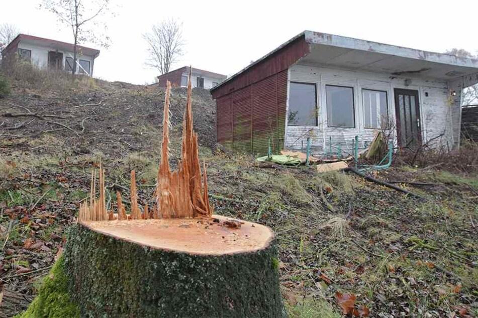Kahlschlag total: Auch die falschen Bäume mussten bei der Aktion dran glauben.