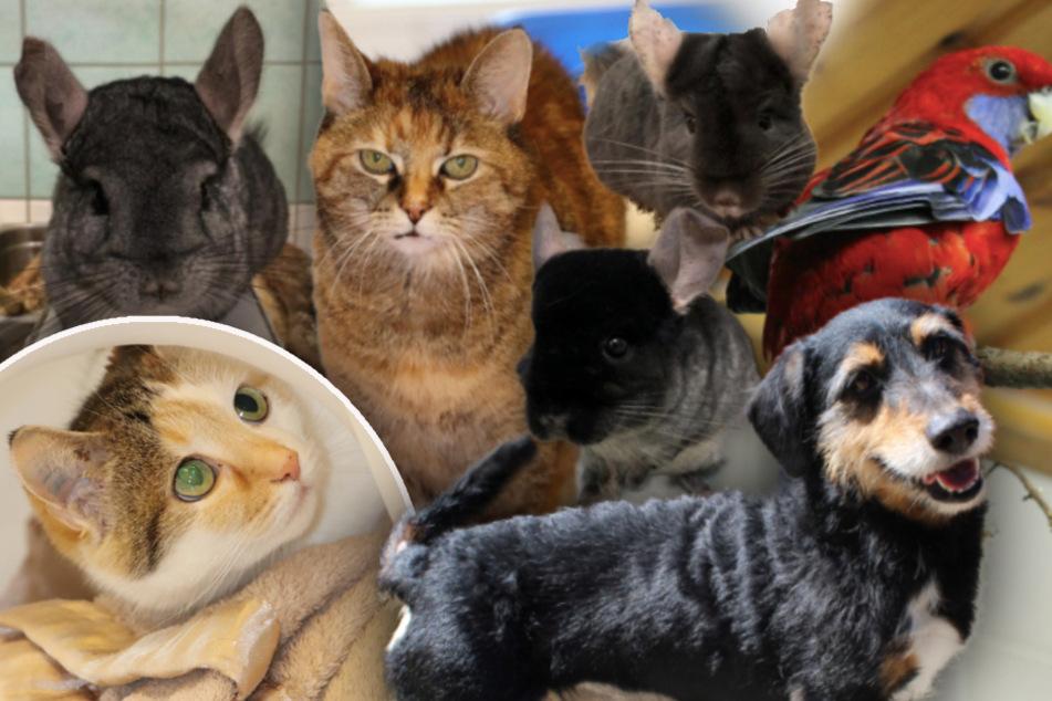 7 besondere Tiere: Diese Hunde, Katzen und Vögel finden einfach kein Zuhause