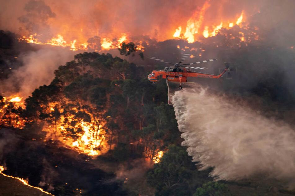 Ein Löschhubschrauber bekämpft ein Buschfeuer im Bundesstaat Victoria.